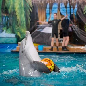 Дельфинарии, океанариумы Култука