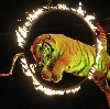 Цирки в Култуке