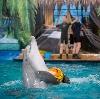 Дельфинарии, океанариумы в Култуке